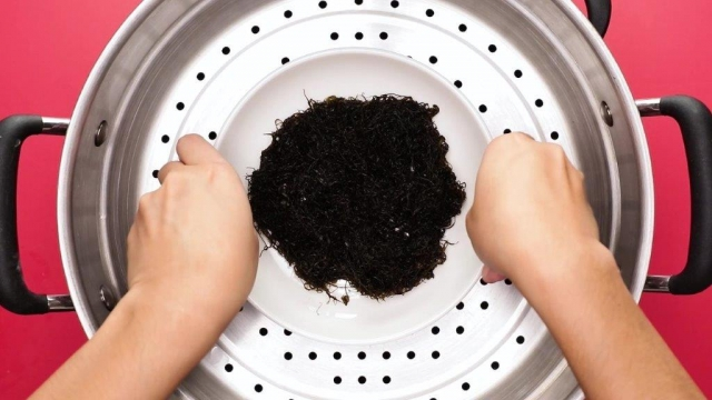 Placing plate of black moss into steamer